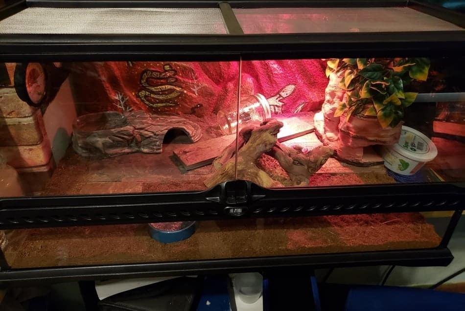 How Often Should I Clean My Leopard Gecko's Tank?