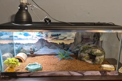 Are Leopard Geckos Sensitive to Light?