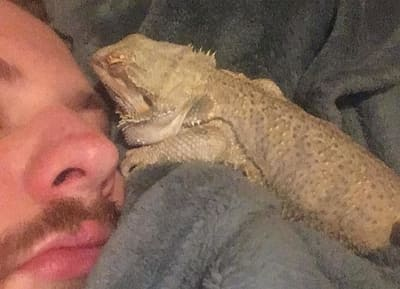 Can My Bearded Dragon Sleep With Me?