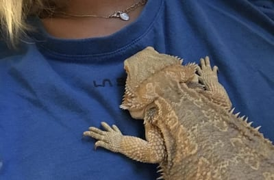 Why Does My Bearded Dragon Fall Asleep on Me?