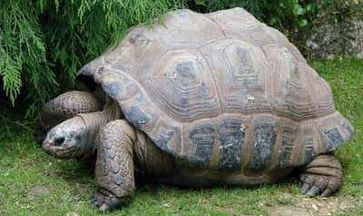 Why Is My Tortoise Walking Backwards?