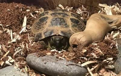 Why Is My Tortoise Inactive?