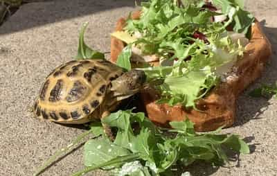 Why Is My Tortoise Eating So Much?