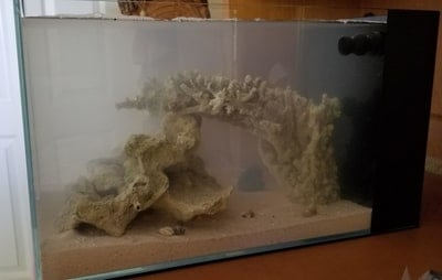 Can a Turtle Tank Be Too Deep?