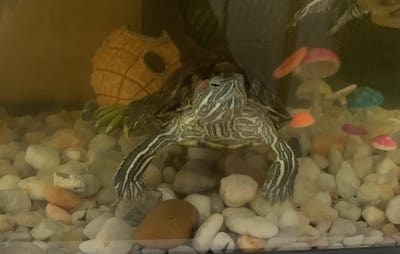 Why Does My Turtle Tank Have Worms?