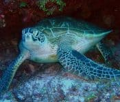 Sea Turtles in Florida (5 Species With Pictures)