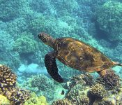 5 Sea Turtles in Texas (Pictures and Facts)